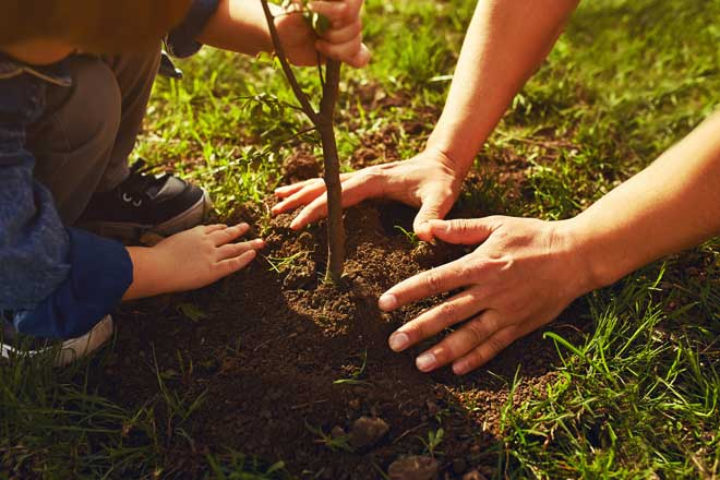 Father and Boy Planting a Tree in the Garden