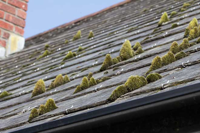 Moss Growth on a Slate Roof
