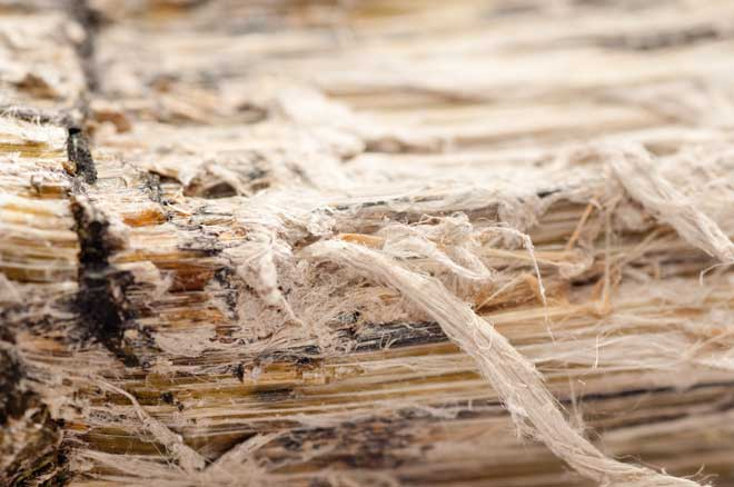 Close Up of Asbestos Fibers