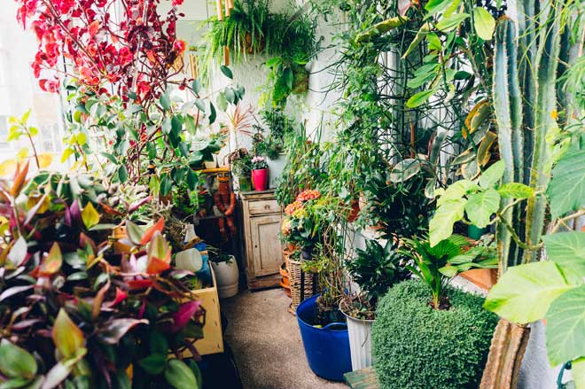 Room Densely Filled with Plants