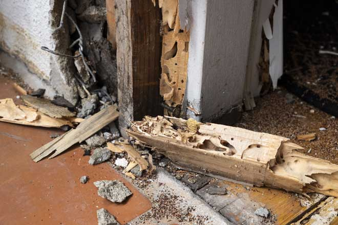 Close Up of Termite Damage