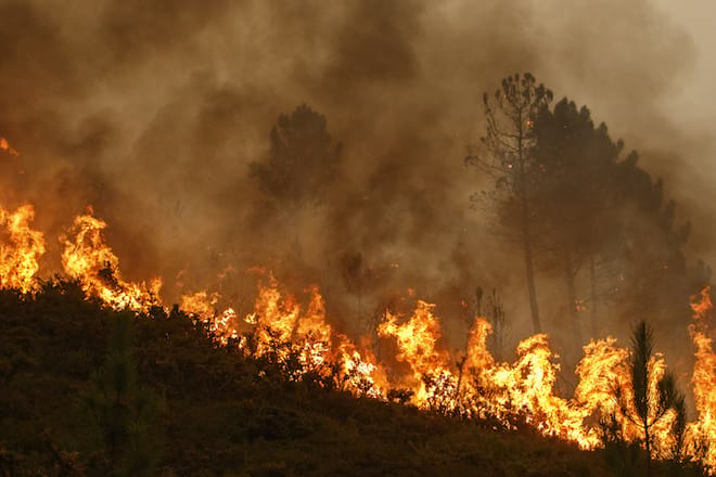 Forest Fire and Dense Smoke