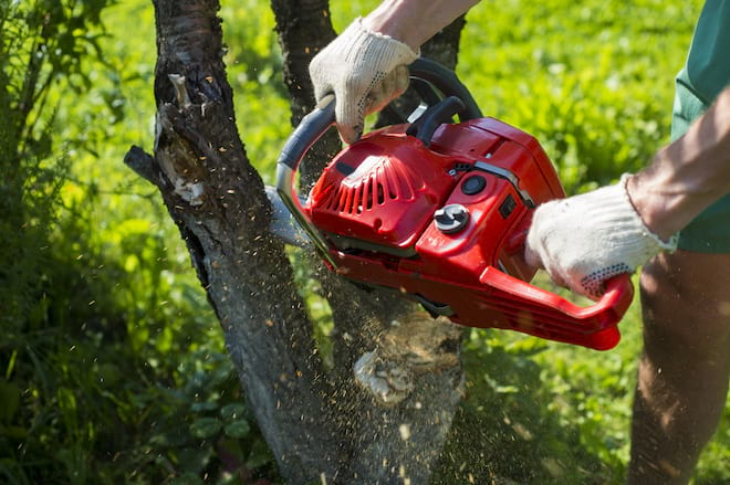 Man Cutting A Small Branch with Chainsaw
