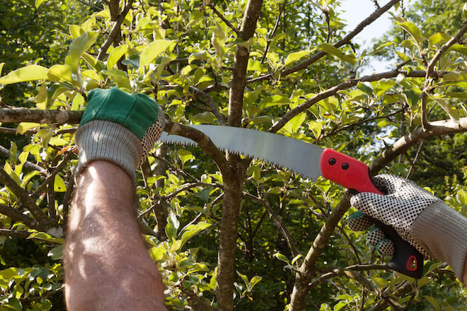 Man Using a Pruning Saw