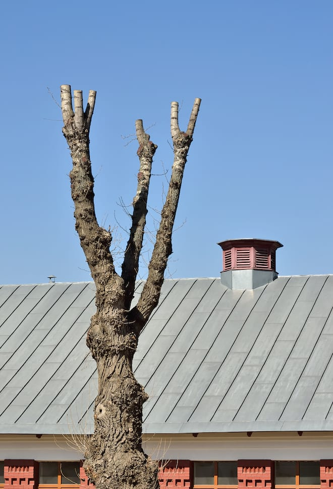 Topped Tree with Roof in the Background