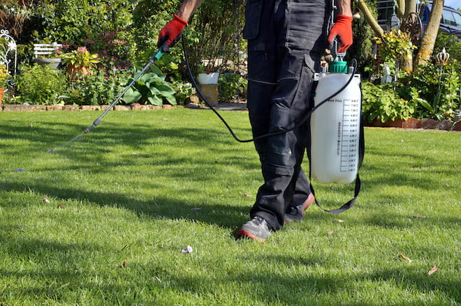 Man Spraying Pesticide on Lawn