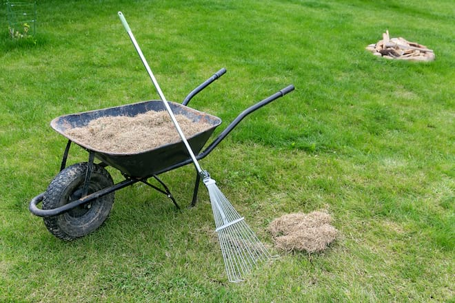 Dethatching Lawn with Rake