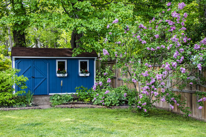 Backyard Lawn and Blue Shed