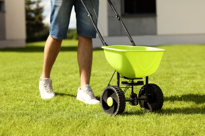 Man Using a Seed Spreader on Lawn